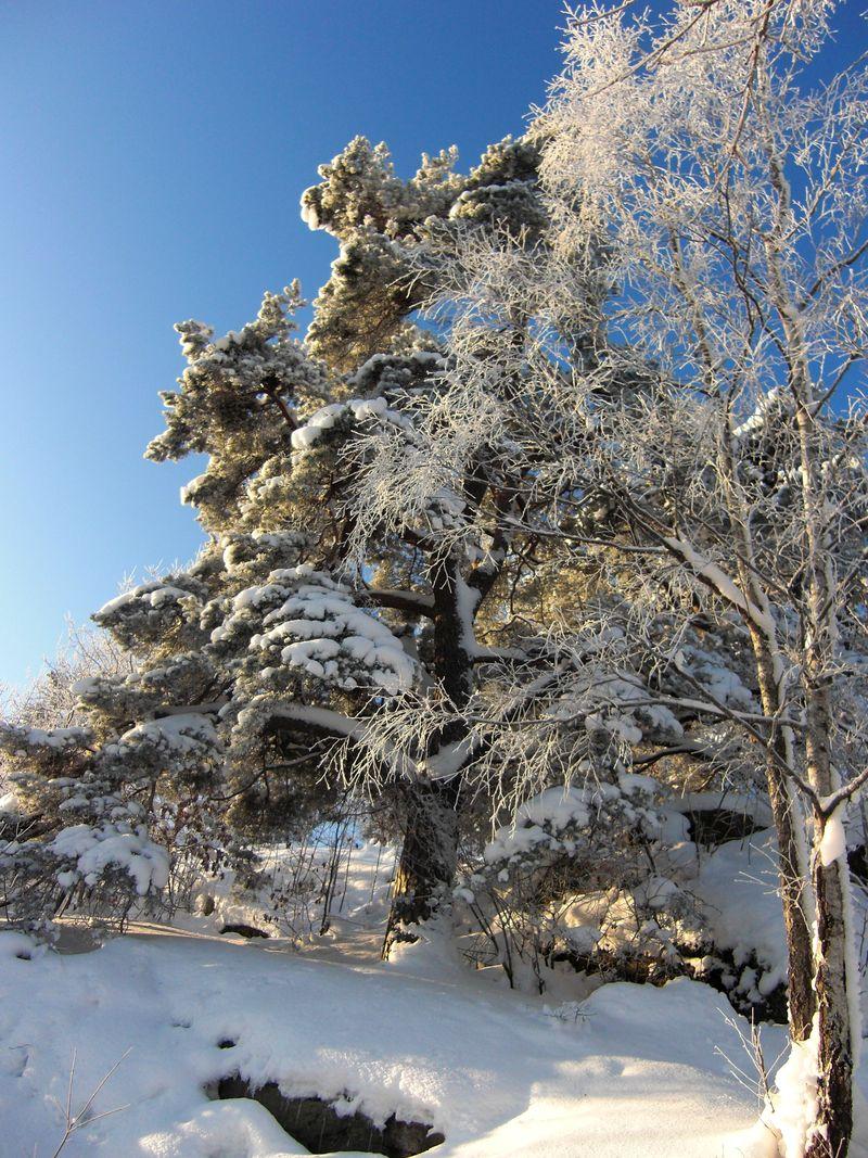 JUL + Snö 031